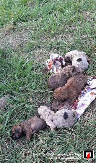 نجات 5 قلاده سگ از چاه فاضلاب /آتش نشانی رشت