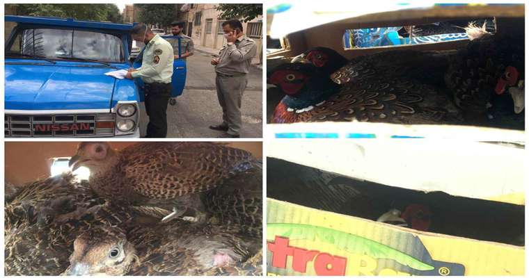 کشف محموله غیرمجاز پرنده وحشی در جنوب شرق استان تهران