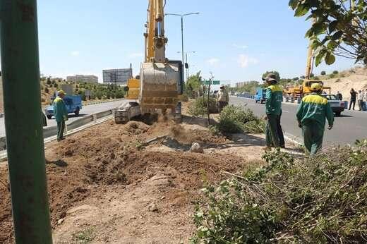 درختان واقع در مسیر دوربرگردان پاسداران به کوی نصر جابهجا شد