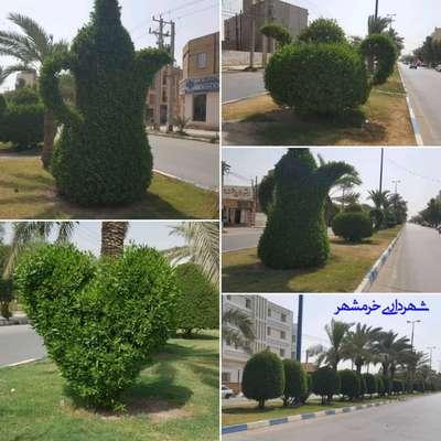 از هرس و فرم دهی درختان تا تقویت آبیاری فضاهای سبز خرمشهر