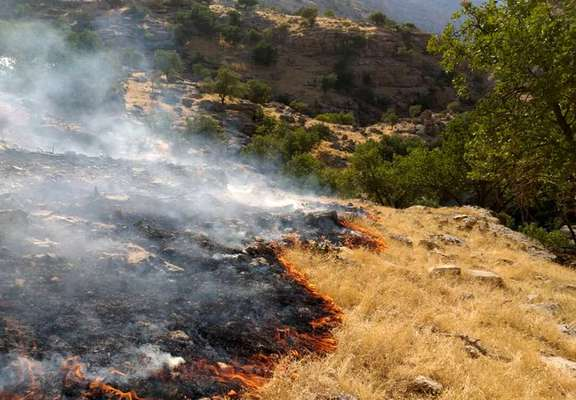 مهار و کنترل آتش سوزی در منطقه حفاظت شده بیرمی استان بوشهر