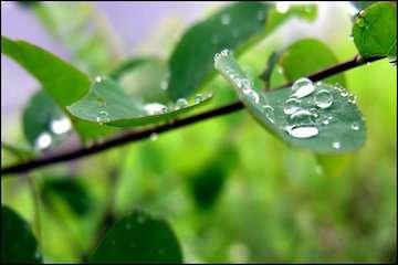 بارشهای پراکنده در استانهای نیمه شمالی/تداوم گرد و خاک و کاهش کیفیت هوا در سیستان، هرمزگان و فارس/تهران خنک میشود