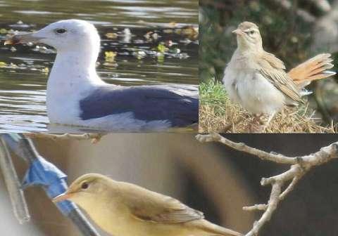 مشاهده ۳ گونه پرنده جدید در چهارمحال و بختیاری ثبت شد