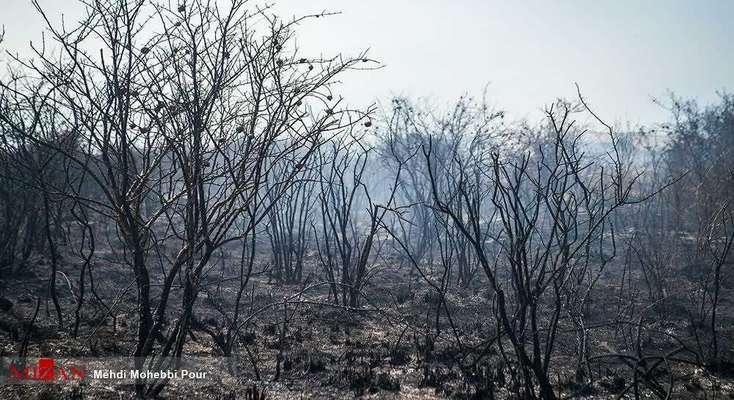 مهار کامل آتش سوزی در پناهگاه حیات وحش میانکاله