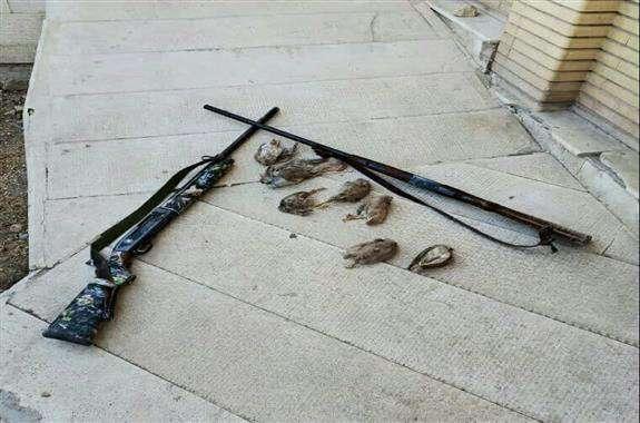 دستگیری ۴ شکارچی متخلف در ایلام / کشف دو قبضه سلاح شکاری