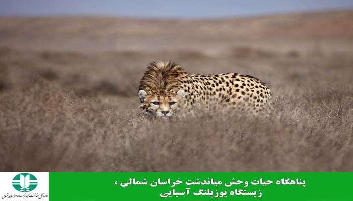 قلمرو یوزهای خراسان شمالی گسترده تر شد