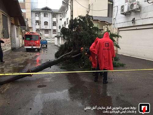 عملیات آتش نشانان در پی سقوط اصله درخت بر روی کابل برق معابر/آتش نشانی رشت