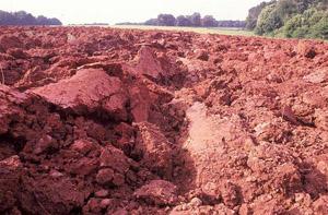 بهره برداری از مرغوب ترین خاک سرخ جهان در جزیره هرمز آغاز شد