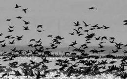خداحافظی پرندگان مهاجر با تالابهای گلستان