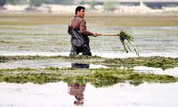 در عصر حاضر به رودخانه زایندهرود بیمهری میشود