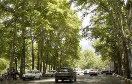 کاشت درختان چنار در خیابان ولیعصر