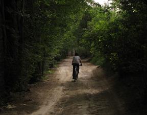هشدار در مورد قطع درختان ناهارخوران