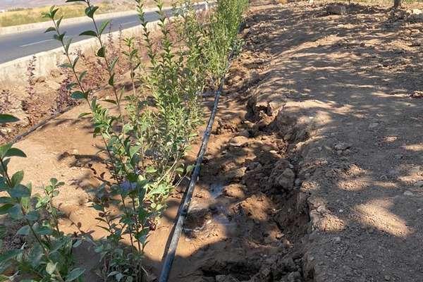 سیستم آبیاری قطره ای در بلوار امام علی(ع) اجرا شد