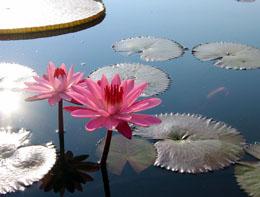 «باغگل» کنار دریاچه چیتگر ساخته میشود
