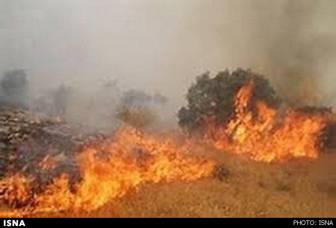 مردم با چشمانی اشکبار آب بر آتش جنگل ایلام میریزند