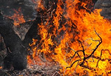 نابودی دهها نخل به دلیل آتشسوزی