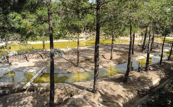 سقوط درختان در پارک لویزان