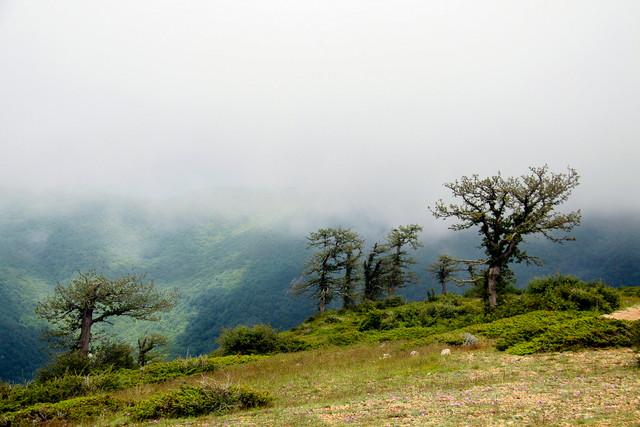 «جنگل ابر» منطقه حفاظت شده، اعلام شد