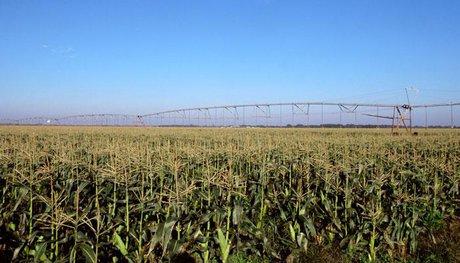 احداث سیستم تصفیه فاضلاب شهری تنها راه حل جلوگیری از ورود فاضلاب ناخوانده به اراضی کشاورزی