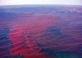 شکوفایی جلبکی، منشاء بوی بد سواحل چابهار