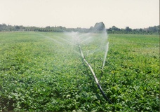 مصرف ۶۰ درصدی آب در کشاورزی بر اساس آمارهای وزارت نیرو