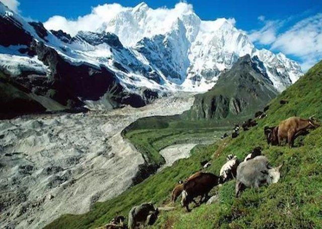 افزایش دمای جهانی تهدیدی جدی برای ثبات و پایداری پوشش گیاهیِ مراتع در نواحی مرتفع