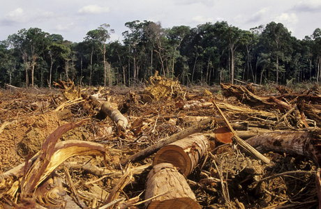 جنگلزدایی عامل انقراض گسترده گونهها در جهان خواهد بود
