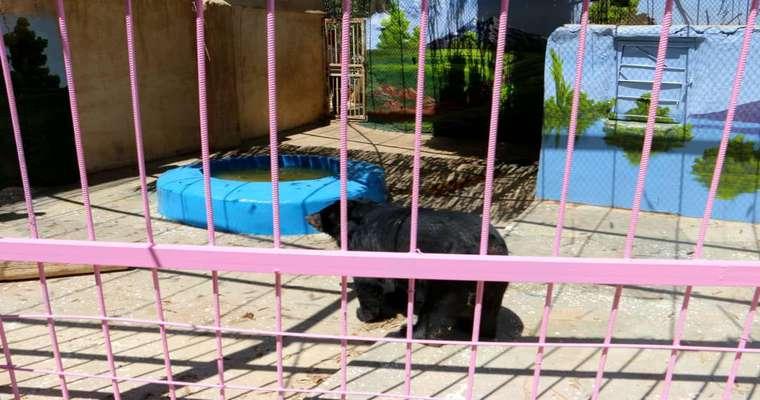 وضعیت مطلوب خرس آسیایی سیستان و یلوچستان