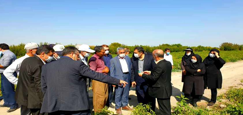 اجرای برنامه های احیای دریاچه ارومیه به توسعه کشاورزی مدرن و افزایش درآمد کشاورزان منجر شده است