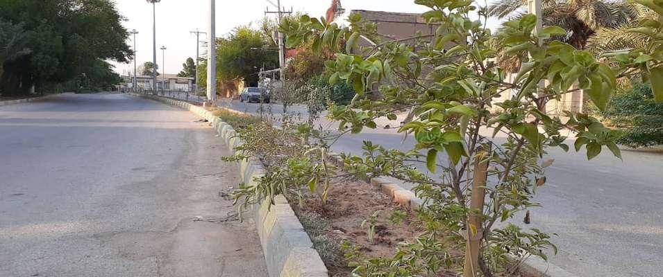 یکصد نهال ویتکس در بلوارجنب پارک آزادی توسط شهرداری خرمشهر کاشته شد
