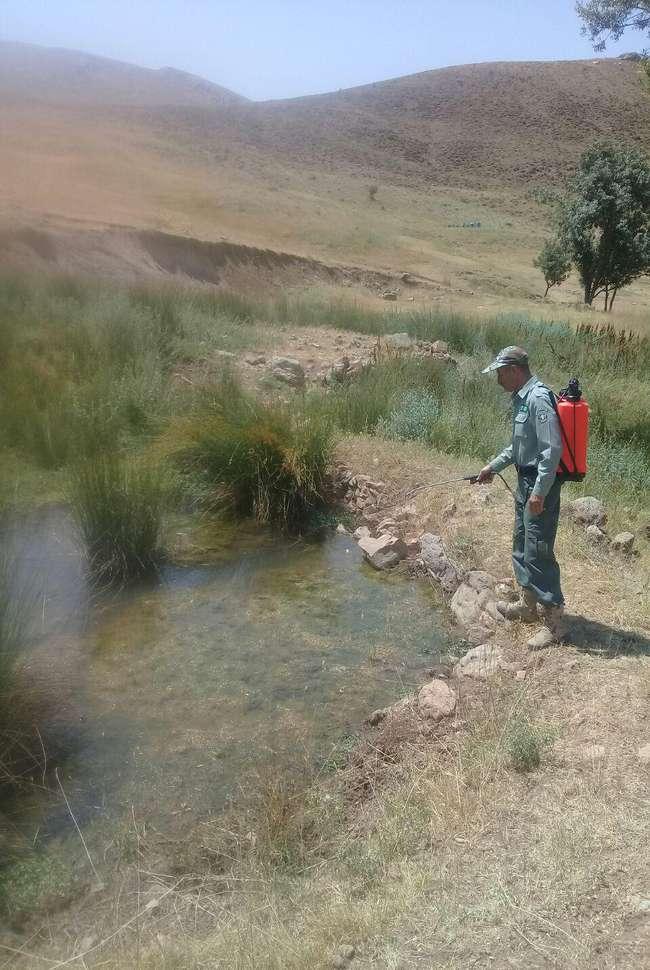 چشمه هاو آبشخورهای منطقه حفاظت شده الموت شرقی قزوین ضد عفونی شد