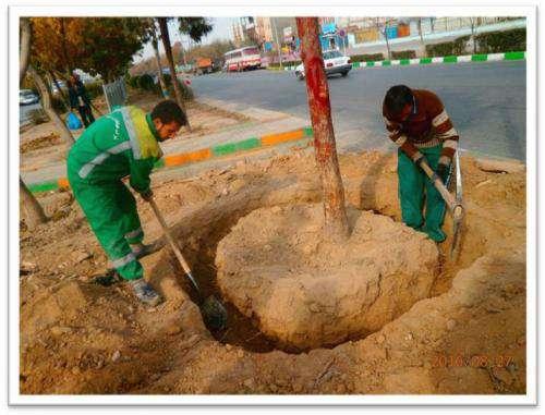 کاشت و نگهداری بیش از ۱۲ هزار اصله درخت روتبال در مشهد