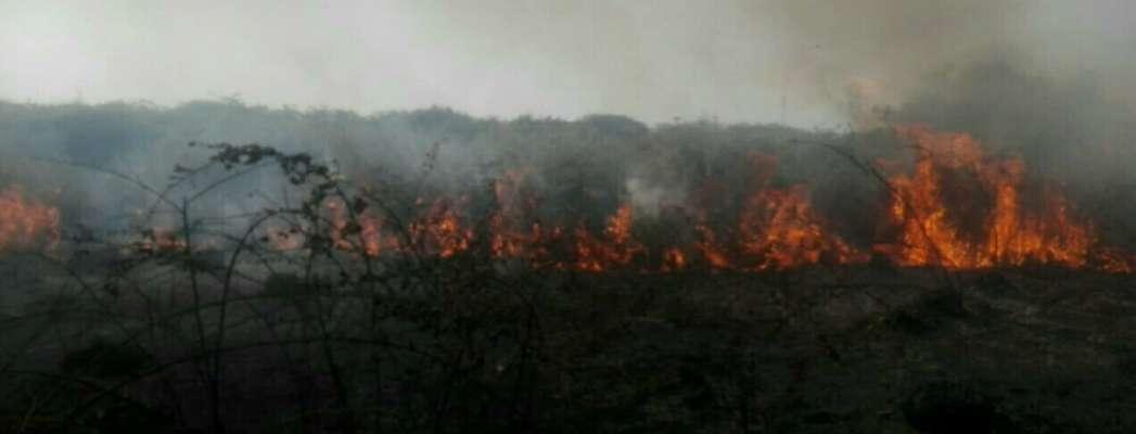 آتش سوزی درمیانکاله مهار شد