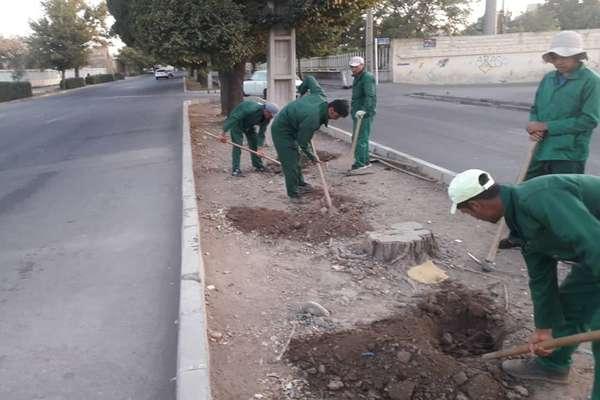 فضای سبز حاشیه خیابان سلامگاه واکاری شد