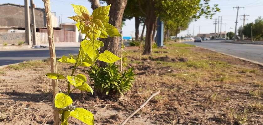 گل های کاغذی در بلوار امیرکبیر توسط سازمان فضای سبز شهرداری خرمشهر کاشته شد