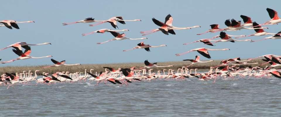 شناسایی ۱۸۰ گونه پرنده در نخستین سایت پرنده نگری کشور