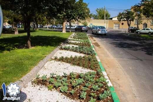 مرحله اول کاشت گلهای فصلی پائیزه در سطح منطقه ۱