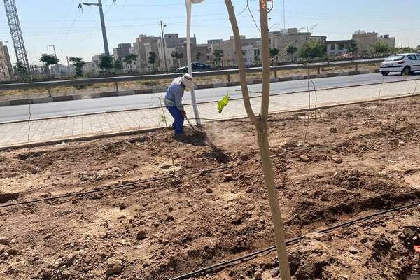 توسعه سیستم آبیاری قطره ای در بوستان امام علی(ع)