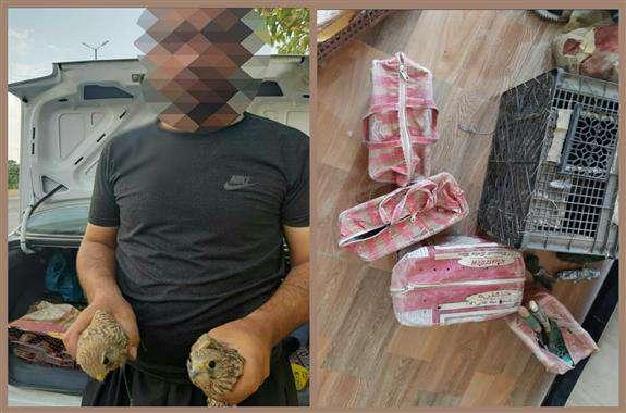 دستگیری ۳متخلف صید و زنده گیری پرندگان شکاری در هلیلان
