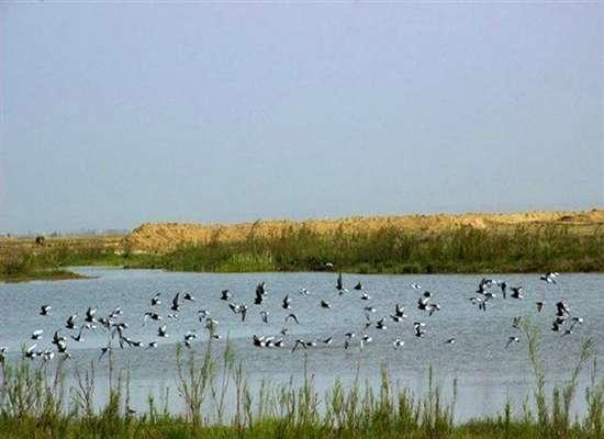 تالابهای لرستان استراحتگاه مناسبی برای پرندگان مهاجر هستند