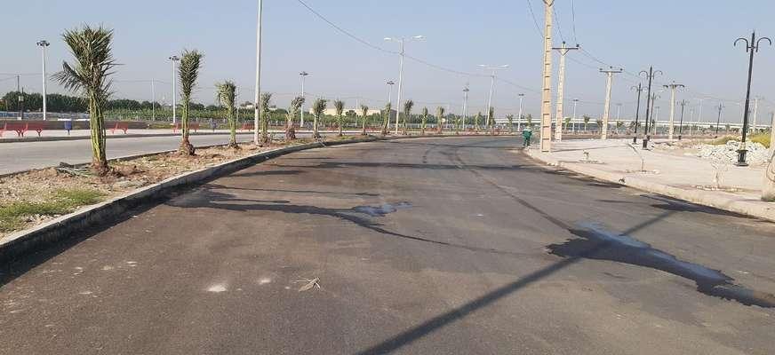 نخل های  ثمرده در بلوار ساحلی توسط شهرداری خرمشهر کاشته شد