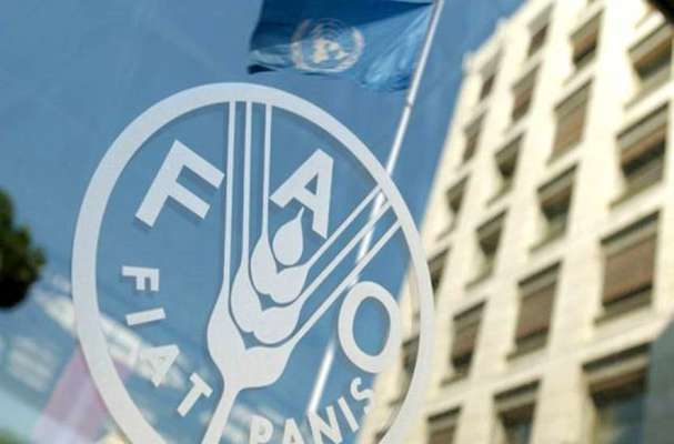 حمایت فائو از ایران برای تقویت تامین مالی اقدامات اقلیمی