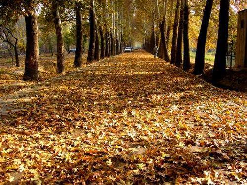 ۷۲ معبر پاییزی در شهر ایجاد می شود