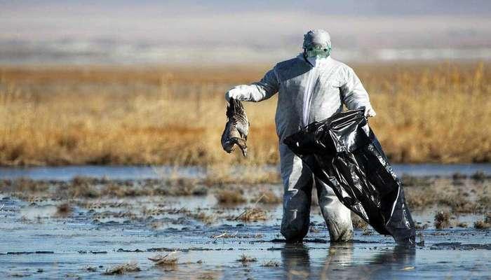 پایش ۵۰۰ هکتار از تالاب میقان و دفن ۴۵ لاشه/ واحدهای مرغداری همجوار تالاب ایمنی زیستی را رعایت کنند