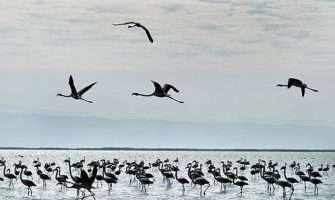 ۹۰ گونه پرنده مهاجر در هرمزگان درحال زمستان گذرانی هستند