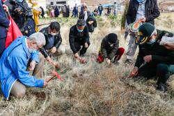 طرح زاگرس سبز و کاشت بذر گیاهان بومی در پارک کوهستانی دراک اجرا شد