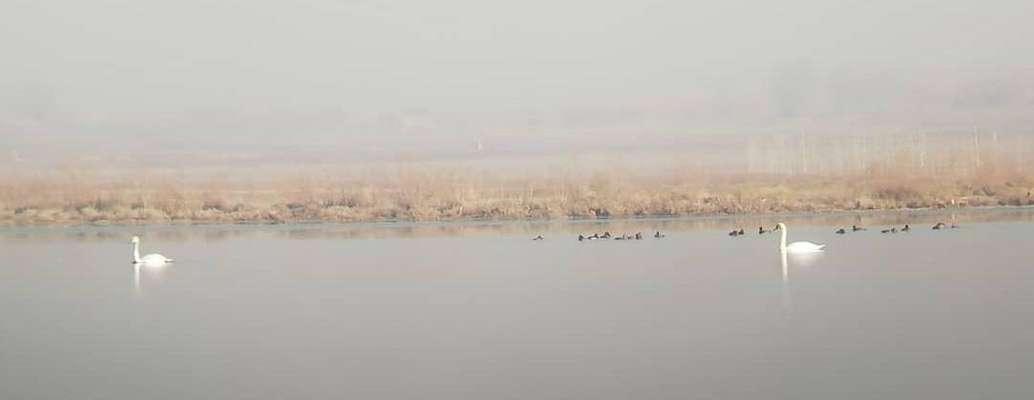 تالاب اله آباد آبیک میزبان ۲۲ گونه پرنده آبزی و کنار آبزی است