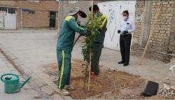 ۳۸هزار نفر در سامانه «سبزینه» برای درخواست کاشت نهال رایگان ثبت نام کردند