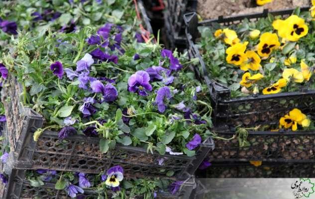 آغازکاشت گلهای بهاره در سطح شهرداری منطقه 8
