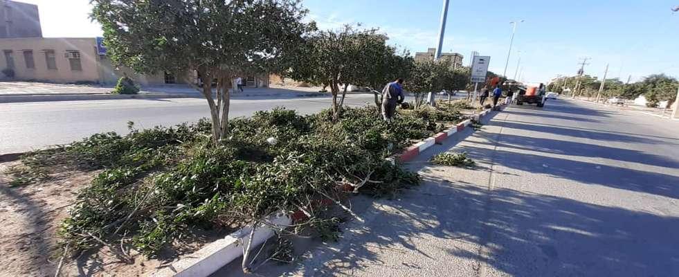 شهردارى خرمشهر  با فعال  سازى سه اكيپ عمليات هرس و فرم دهى درختان را آغاز كرد